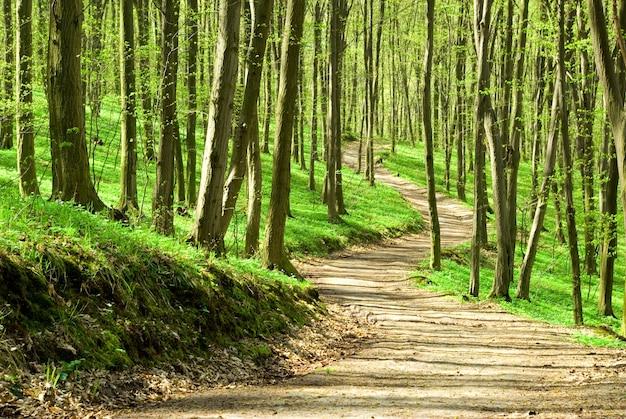 晴れた日の緑の森の背景