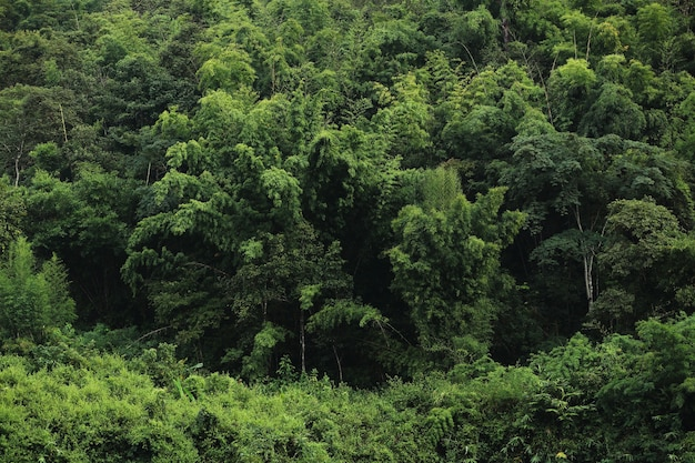 Green forest background texture