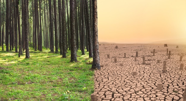 Green forest and dry land with cutted tree