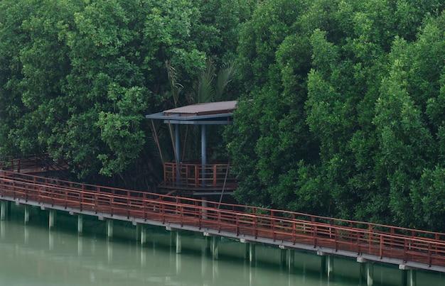 녹색 숲 녹색 자연