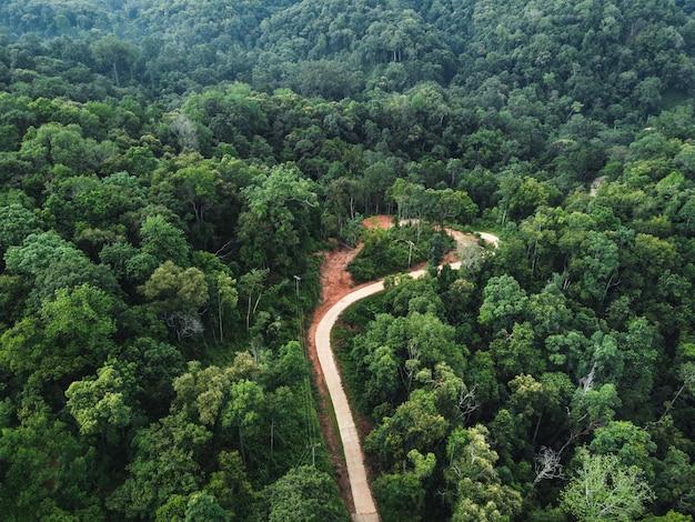 上から見た熱帯の緑の森と森の中の道