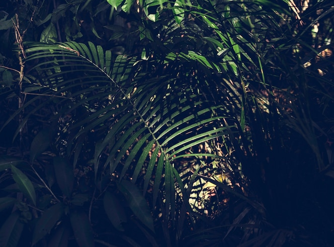 Green forest jungle with palm leaves