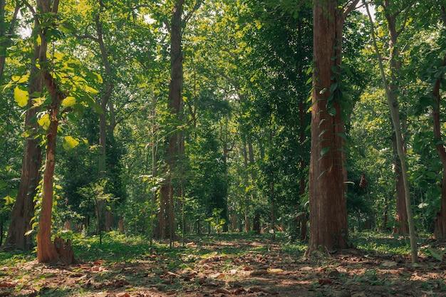 春の緑の森の風景と緑の苔、森の中を照らす太陽の光