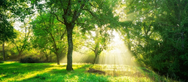 Green forest landscape at sunrise.