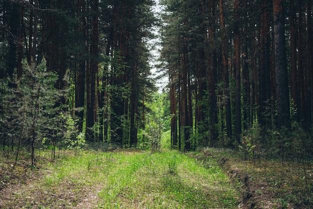 緑の森の風景。