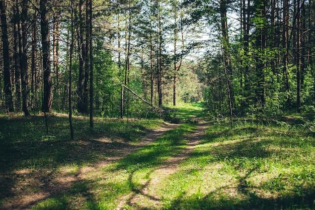 Зеленый лесной пейзаж.
