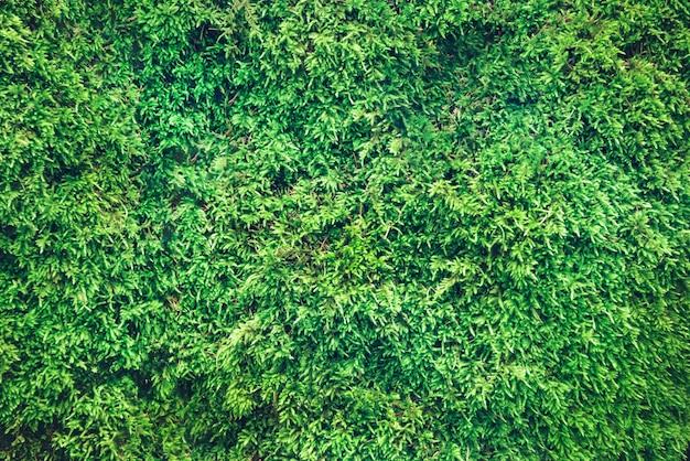 緑の森の苔の背景