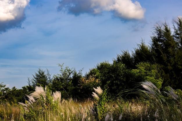 다양한 식물이 있는 바다 해변 근처의 푸른 숲