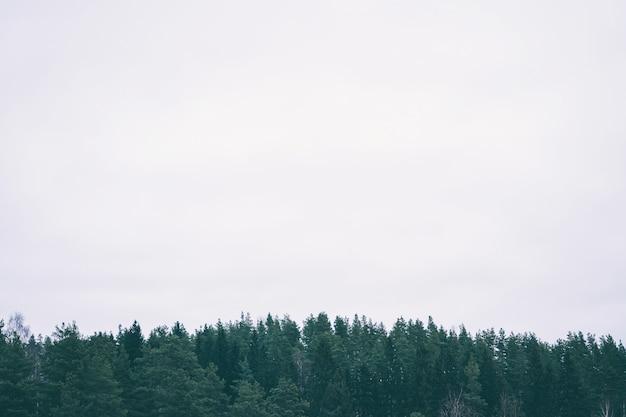 Зеленый лес на сером небе. минималистичный природный ландшафт