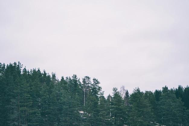 灰色の空に緑の森。ミニマルな自然の風景