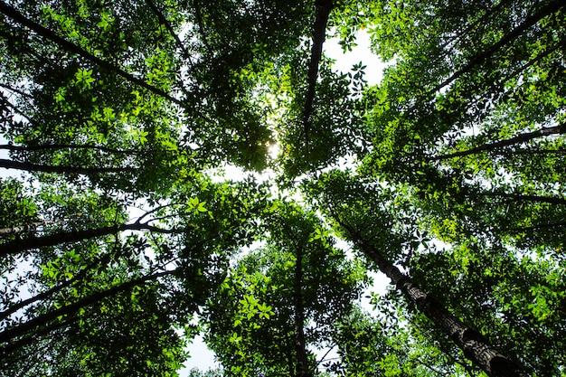 葉を通して輝く夏の太陽の緑の森の木の葉、自然なキャンバスの質感。