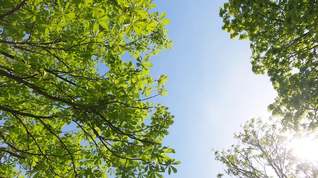 푸른 하늘과 여름 태양에 대 한 녹색 숲 나무. 4k 슬로우모션 모션 샷. 인도네시아 발리.