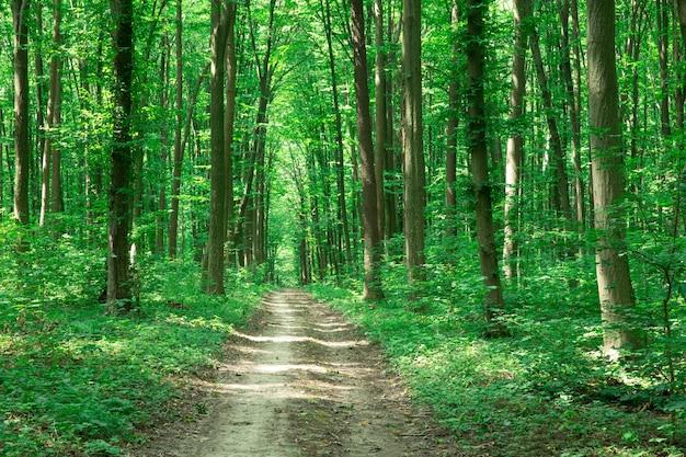 緑の森の木。自然緑の木の日光の背景