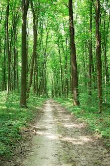 緑の森の木々自然緑の木の日光の背景
