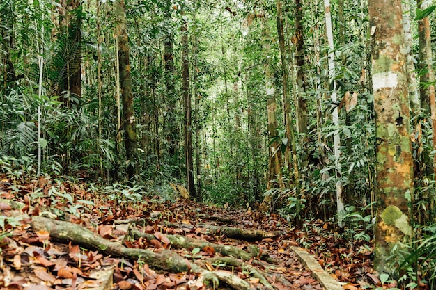 Green forest trees with deciduous leaves on the ground