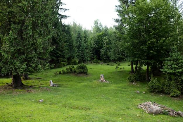 아름다운 잔디와 녹색 숲