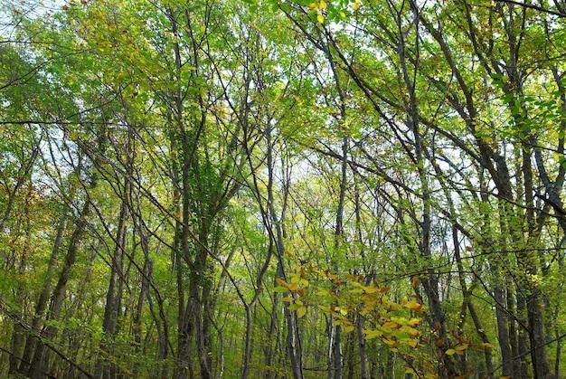 晴れた日の明るい葉の緑の森