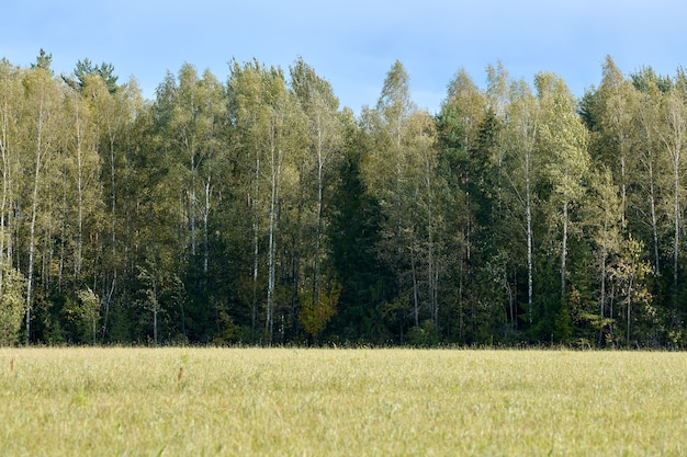 Green forest with grass on meadow. summer wood landscape, pasture cattle. beautiful grass and forest background for design.
