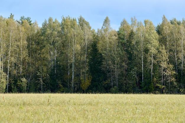 초원에 잔디와 녹색 숲입니다. 여름 나무 풍경, 목초지. 디자인을 위한 아름다운 잔디와 숲 배경.