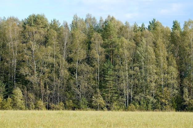 풀밭에 잔디와 녹색 숲입니다. 여름 나무 풍경, 목장 소
