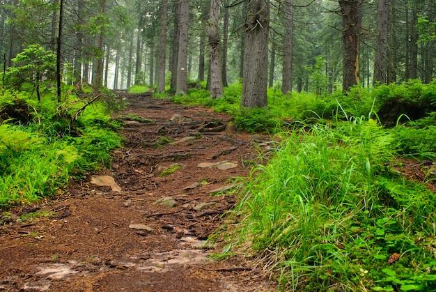 地衣類と苔の古い木々と緑の森