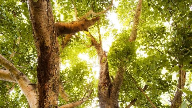 Foresta verde con la luce del sole