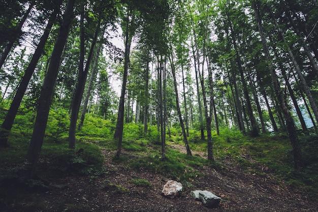 ドイツの緑の森の風景の背景