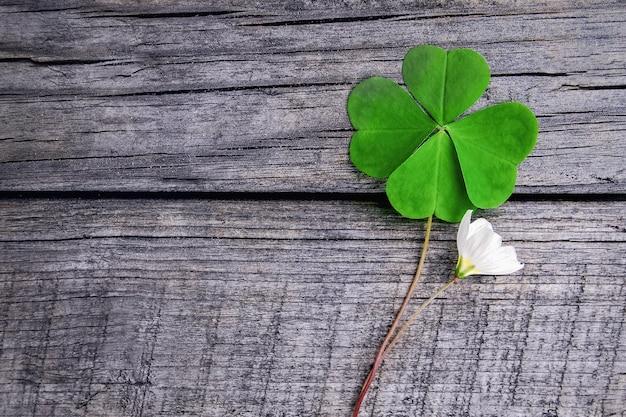 나무 배경에 녹색 네 잎 클로버