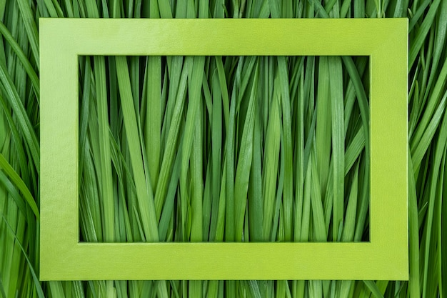 Green frame on grass background, texture, closeup