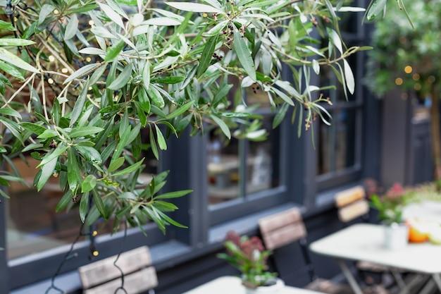 복사 공간이 있는 도시 카페의 흐릿한 배경 앞에 있는 나무 식물의 녹색 프레임. 빈티지 유럽 야외의 카페 테라스에 의자가 있는 야외 테이블