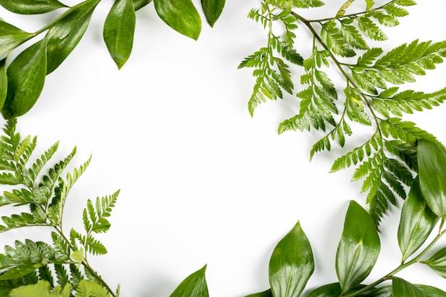 枝と白い背景の上の葉のグリーンフレーム。フラット横たわっていた、トップビュー、copyspace。