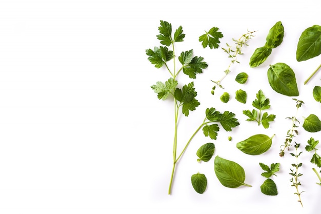 Green fresh aromatic herbs pattern isolated on white. top view.