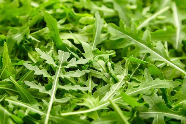 緑の新鮮なルッコラの葉