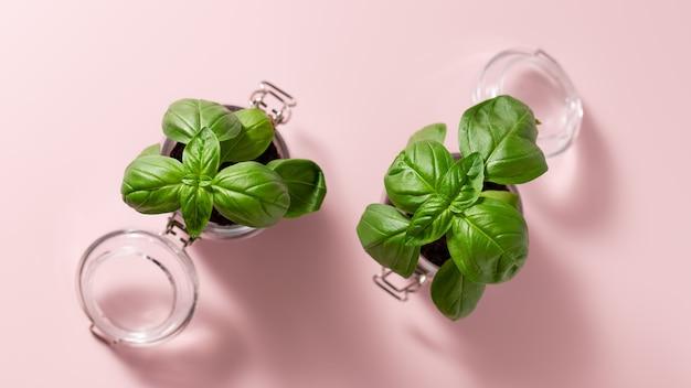 유리 항아리에 녹색 신선한 바질 건강한 식생활 원예