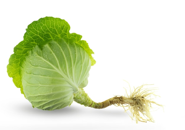 Green fresh cabbage with root isolated on white background