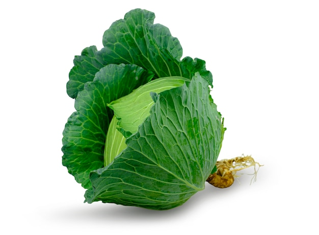 Green fresh cabbage with root isolated on white