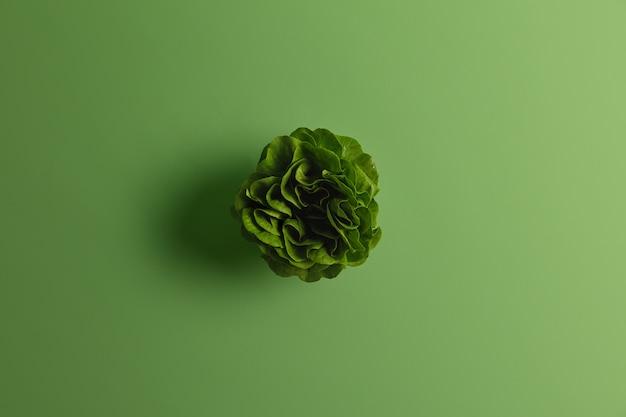 上から撮影した葉の多い緑の新鮮な白菜またはチンゲン菜。ビーガン食のための植物ベースの食品。持続可能なライフスタイルと適切な栄養。庭の野菜。テキスト用のスペースをコピーする