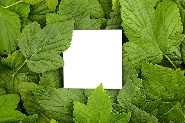緑の新鮮な葉の創造的なフレームレイアウト