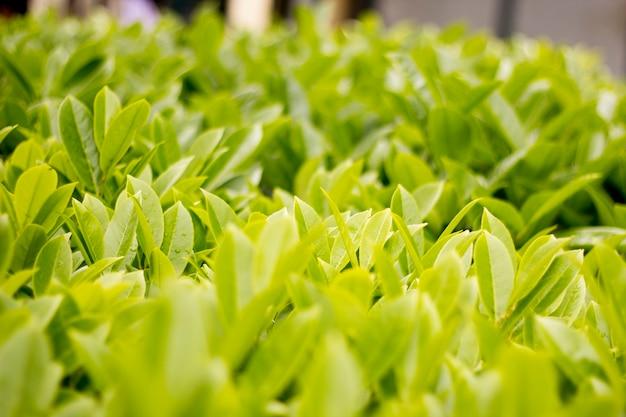 Зеленая свежая листва