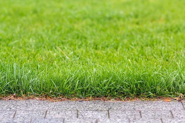 Green fresh grass growing along asphalt gray path, texture for background. green bright sunny lawn, garden or backyard pattern and texture background.