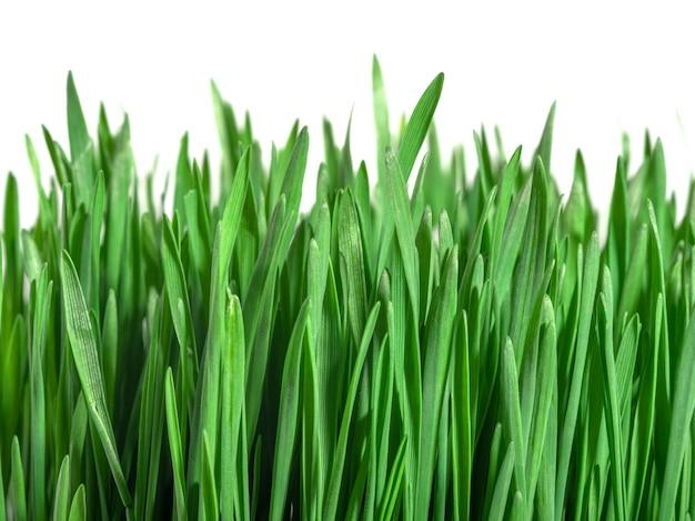 화이트에 녹색 신선한 잔디