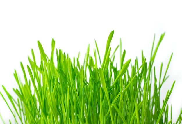 Зеленая свежая трава. вид сбоку. понятие о пружинных столах.