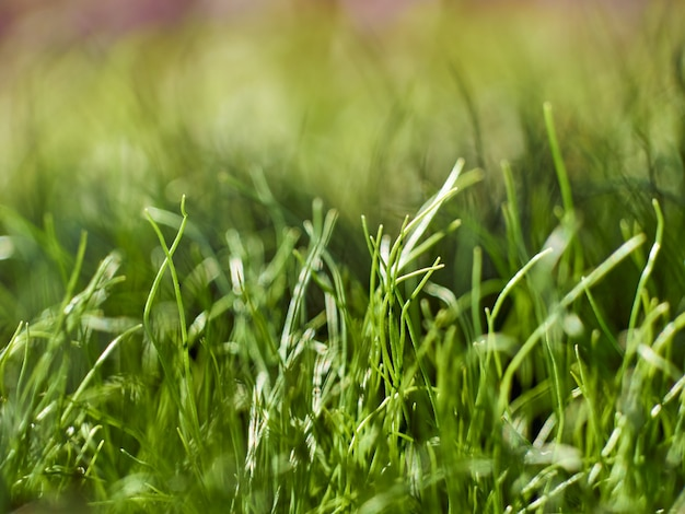 Green fresh grass spring background.