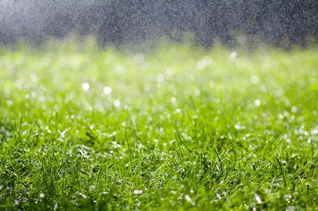 朝の雨水の落下滴と緑の新鮮な草