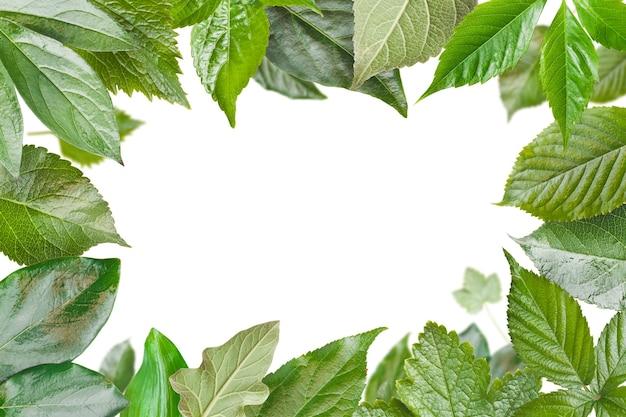 Зеленая рамка из свежих листьев
