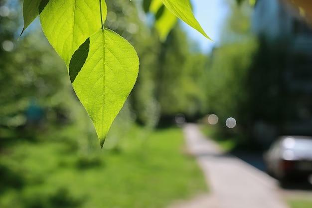 맑고 푸른 하늘에 나무의 녹색 신선한 잎
