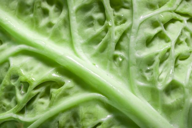 녹색 신선한 자연 잎 질감 배경