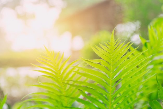 Green fresh nature ecology of fern and sunlight  photosynthesis