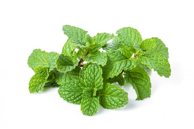 Green fresh peppermint