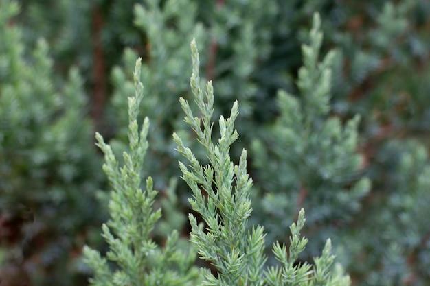 Зеленые свежие растения трава крупным планом для фона
